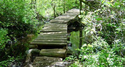 Salem Woods