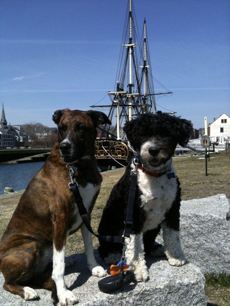 Belle and Tipper Salem 2011_Barb Swartz