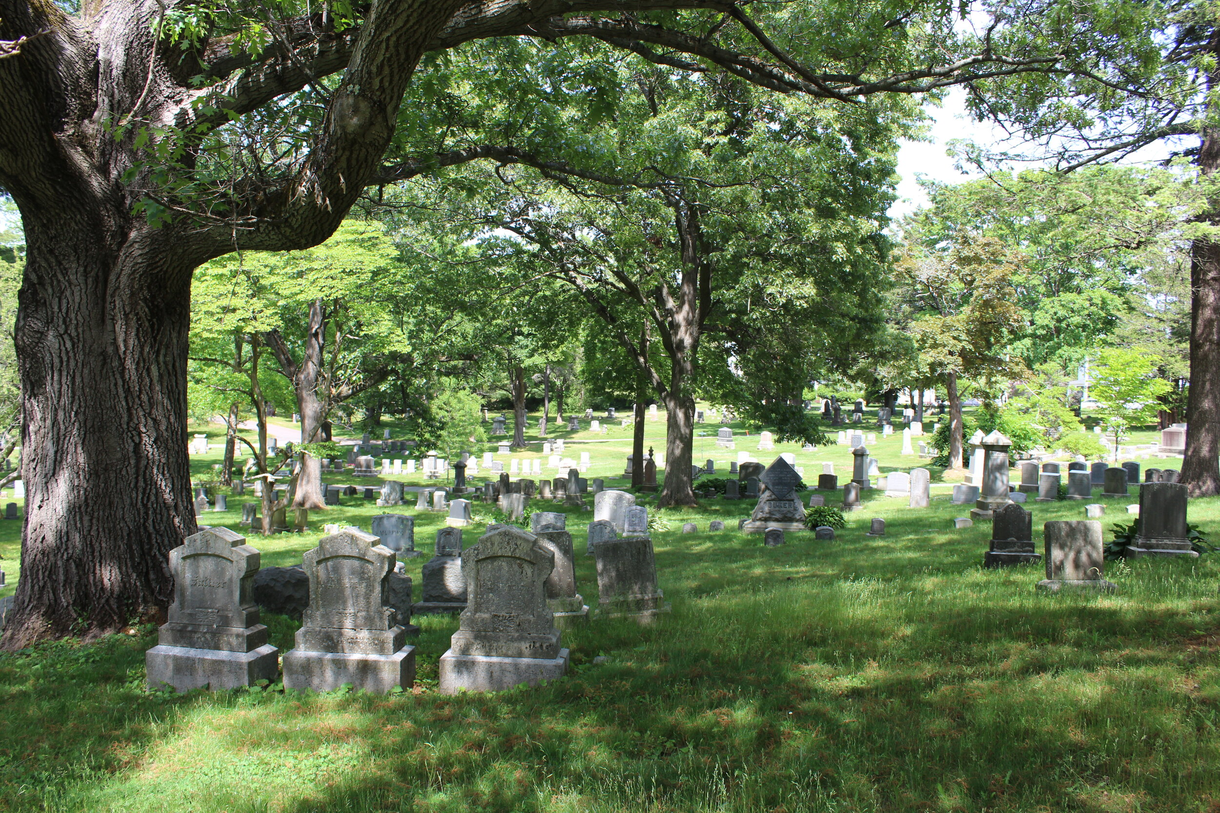 Gravestones surrounded by trees